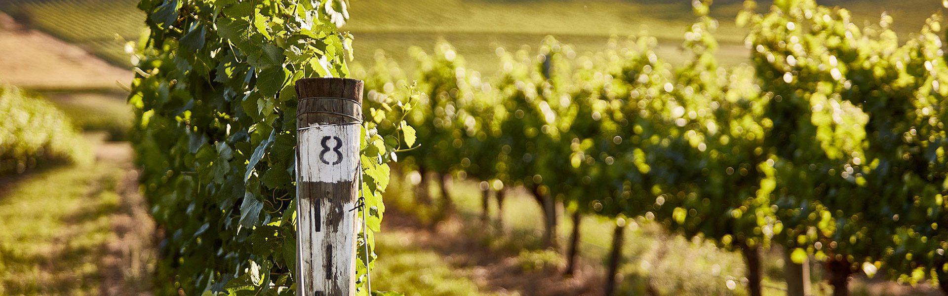 wine yarra valley header 6