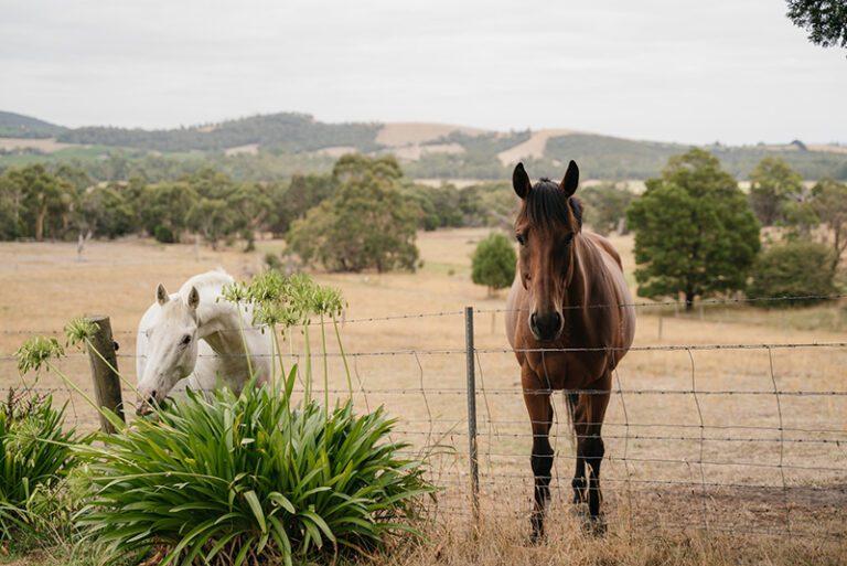 Wiggley Bottom Farm horses sml 768x513